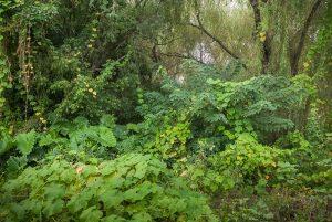 selva marginal la ribera Bernal