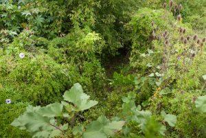selva marginal Bernal
