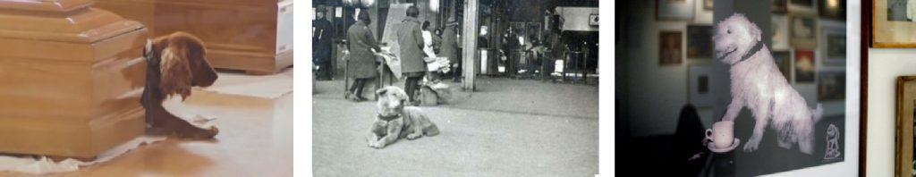 perros solano